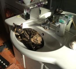 gatto nel lavandino