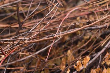 dry tree branch