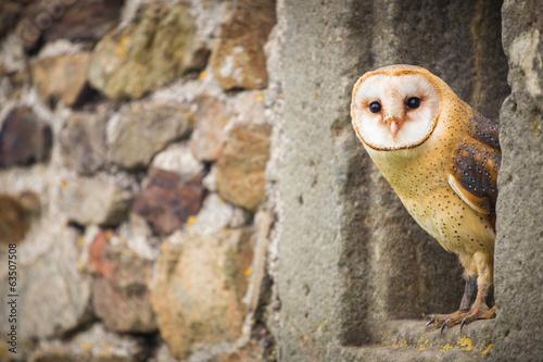 Aluminium Uil Barn Owl bird