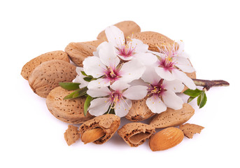 Almonds with a sprig