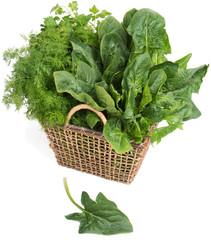 Fresh green herb in wicker basket . Isolated on white background