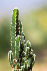 Closeup view of a cactus near Minca
