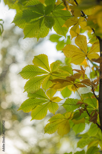 the leaves on the tree in nature in autumn