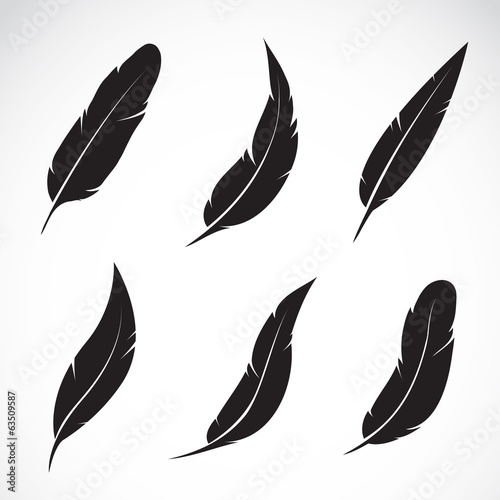 Fototapeta Vector group of feather