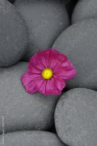 Macro of red flower on pebbles