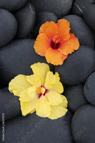 Two different Hibiscus flowers on pebbles