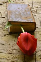 Ποίηση Poesia Poetry Poésie 詩 Poesie Poesía