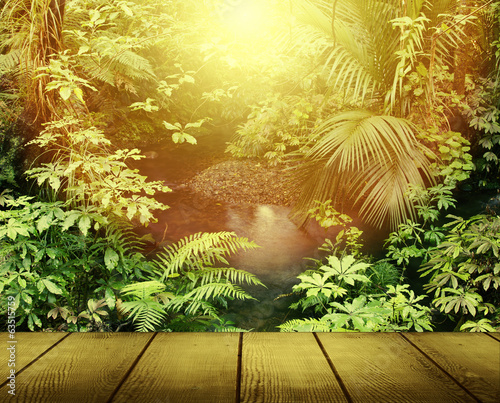 Forest light in jungle
