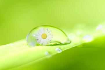 drop of spring