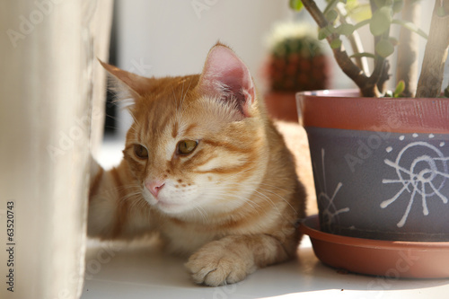 Red cat on the windowsill
