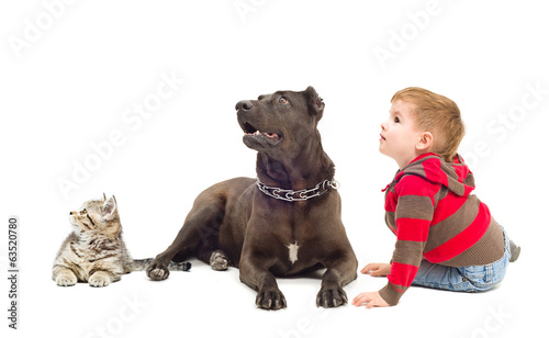 Boy, dog and kitten together looking up
