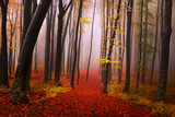 Fototapety Mysterious foggy forest with a fairytale look