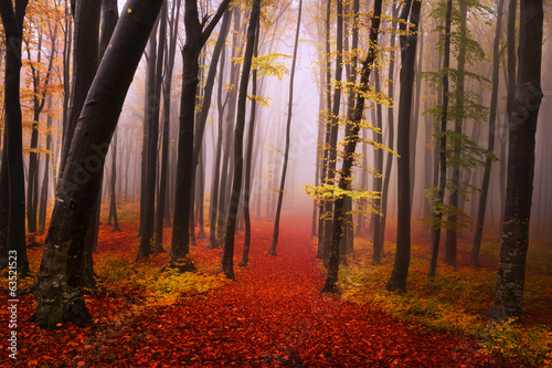 Fotobehang Bossen Mysterious foggy forest with a fairytale look