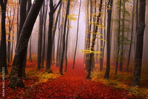 Tajemniczy, mglisty las o bajkowym wyglądzie