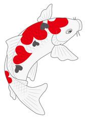 鯉 錦鯉 ハート