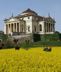 Villa La Rotonda with yellow flower field of rapeseed in Vicenza