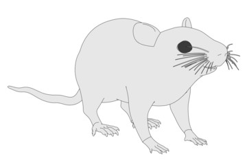 cartoon image of mus musculus