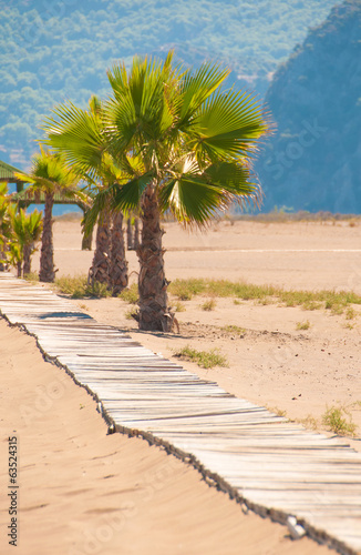 Wooden bridge and palm trees on the sandy coast