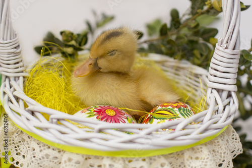 duck sitting in Easter basket