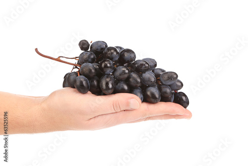 Branch of black ripe grapes on hand