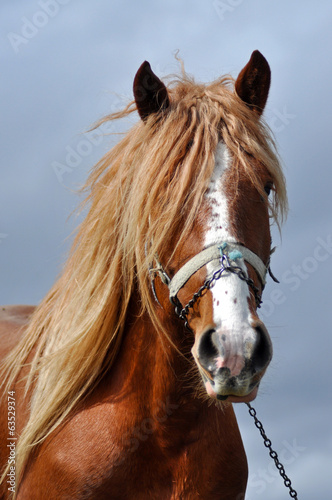 Brown horse with blonde hair