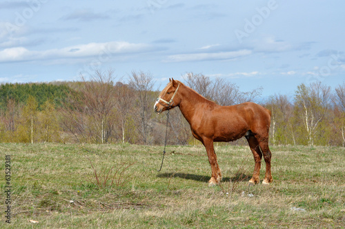Horse in the outdoors