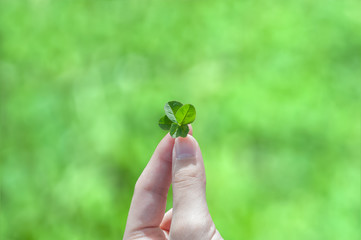A Four Leaf Clover Held by a Young Girl's Hand