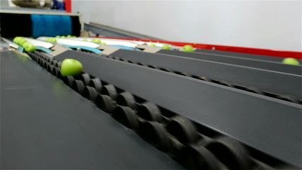 Green apples on a conveyor belt