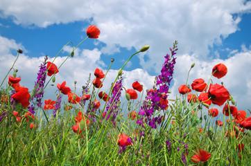In poppies field