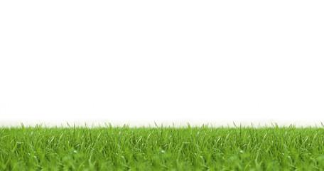 Rasen vor weißem Hintergrund