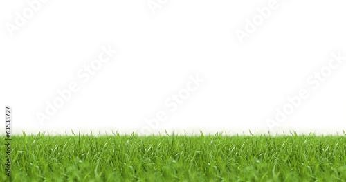 canvas print picture Rasen vor weißem Hintergrund