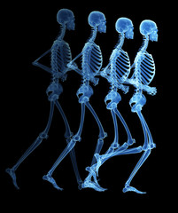 running cycle illustration - the skeleton