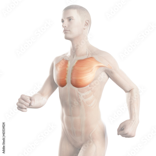 illustration showing the breast muscle of a jogger