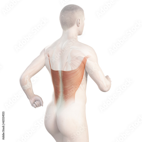 illustration showing the latissimus of a jogger