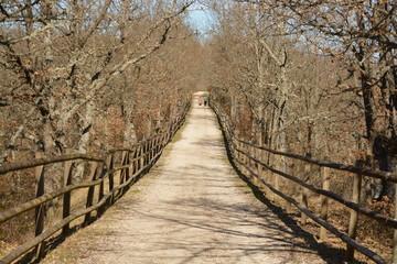 Paseo a traves del bosque en otoño