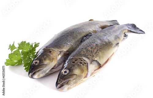 Brown trouts
