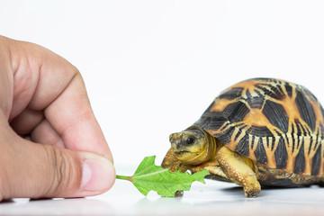 turtle eat