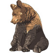 Vector funny bear sitting