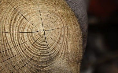 Jahresringe / Holz
