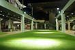 indoor green grass