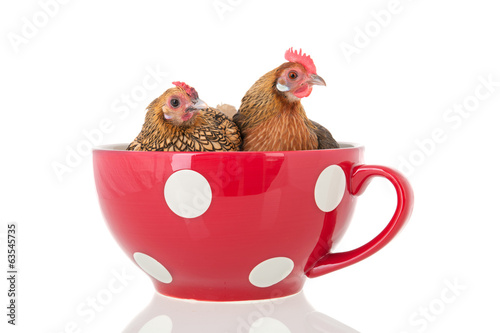Chickens in soup bowl