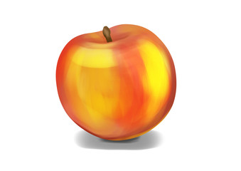 Simple, realistic orange nectarine illustration, front view