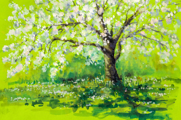 Cherry tree in spring.Watercolors
