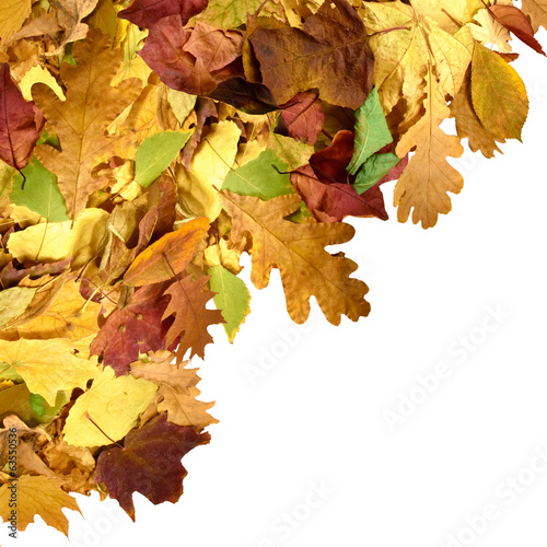 image of beautiful autumn leafs closeup