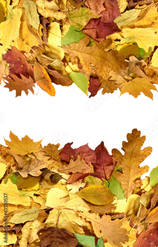 image of autumn leafs closeup