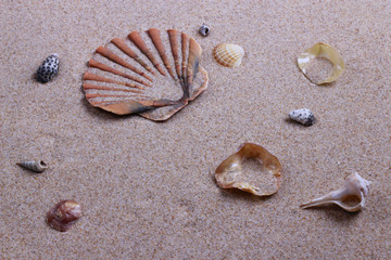 PLAYA  Y CARACOLAS. BEACH SHELLS.