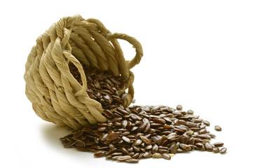 Linum usitatissimum Semi di lino Flax seeds פשתן