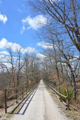 Largo camino de tierra cruzando el bosque