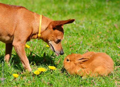 Dog and bunny in the meadow