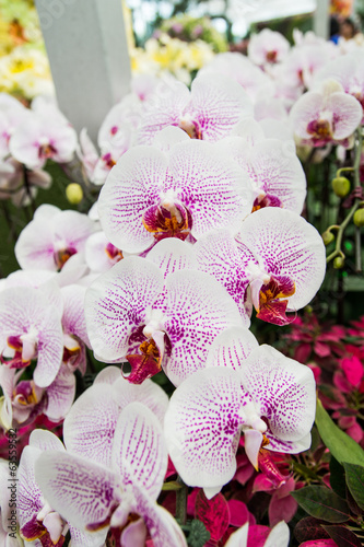 Orchid Science